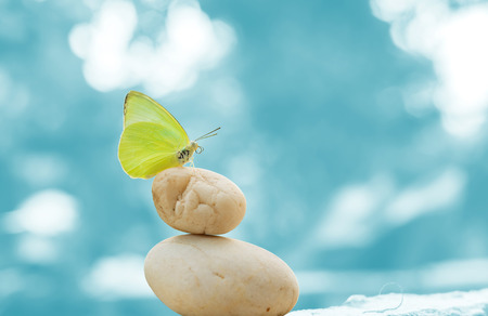 Butterfly on balanced stones with blue background imagination concept Standard-Bild