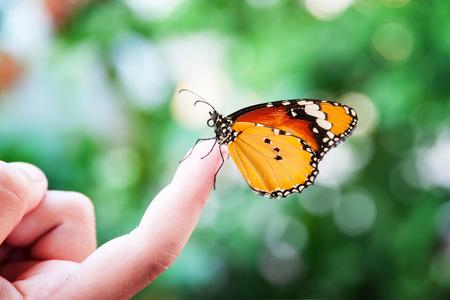 Butterfly on kids finger