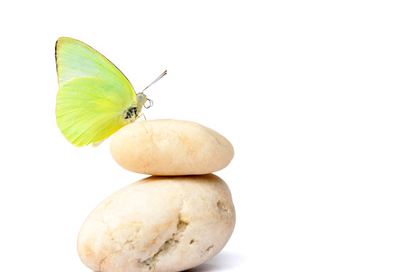 Butterfly on balanced stones imagination concept photo