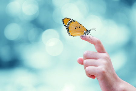 female hand: Beautiful butterfly sitting on the hand Stock Photo