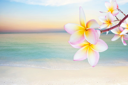 bali massage: Plumeria flowers on the beach Stock Photo