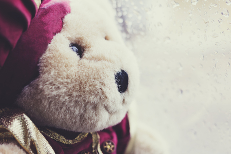 Lonely bear in raining day
