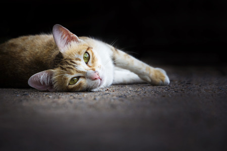 suffusion: Cat portrait lying down on ground Stock Photo
