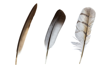 waft: feather on a white background Stock Photo