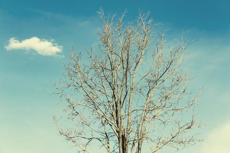 dead tree with clear blue sky,vintage tone 版權商用圖片