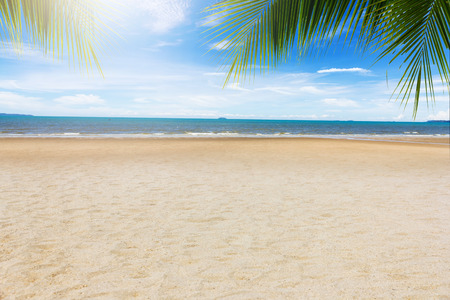 beach with coconut leaves