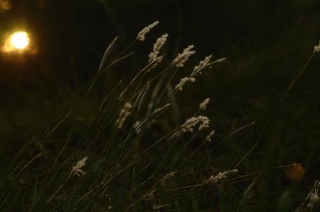 wild grass: Hierba salvaje