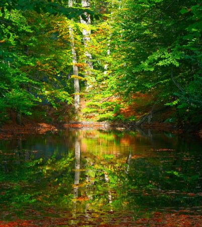 Autumn forest with blue lake photo