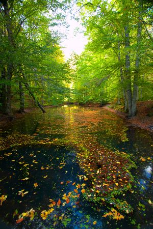Autumn forest with blue river  photo