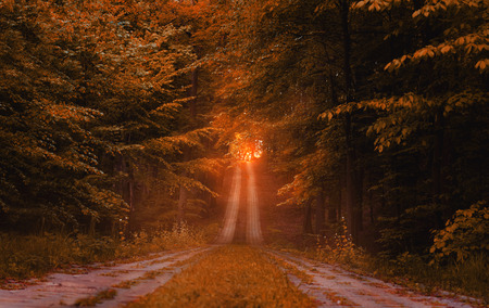 end of a long day: beautiful road in the woods