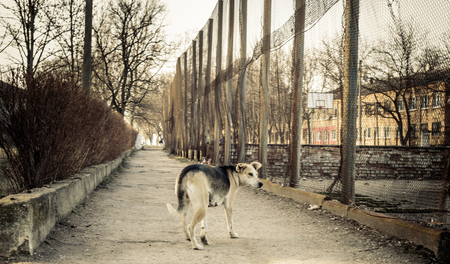 chernobyl: post-apocalyptic dog in a deep ghost town Stock Photo
