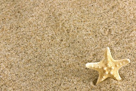 Close up of beach sand and starfish photo