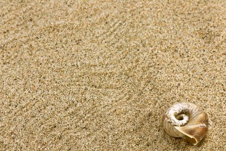 Close up of beach sand and sea shell Stock Photo - 4595000