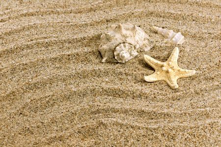 Close up of beach sand and sea shell Stock Photo