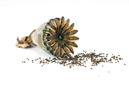 close-up of opium poppy seed on white background