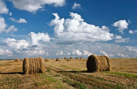 Field after harvesting with blue cloudy sky