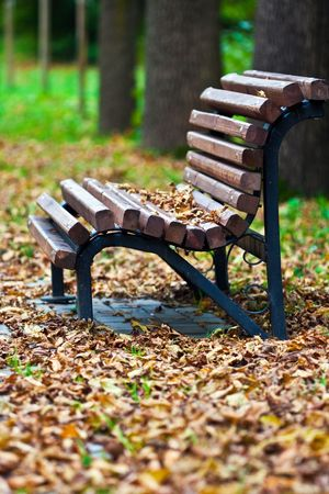 Bench in the park covered in autumn leaves Stock Photo