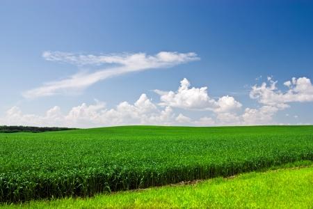 Green grass and dark blue sky Stock Photo