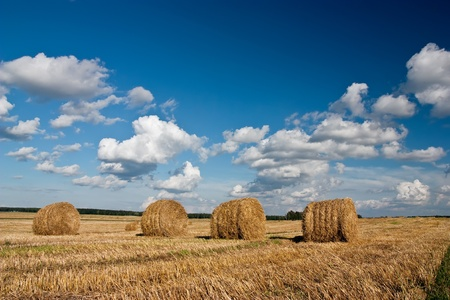 Field after harvesting with blue cloudy sky photo