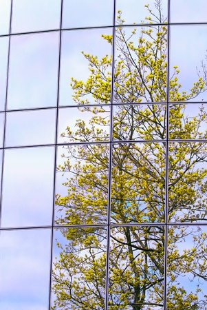 Green trees reflected on a building windows photo