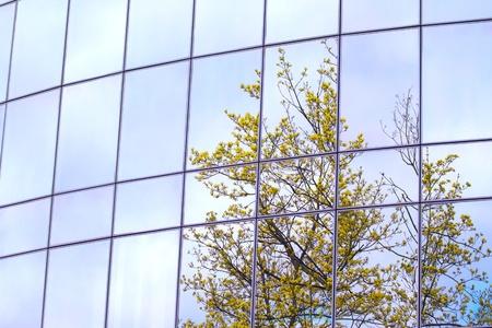 緑の木々 の反射