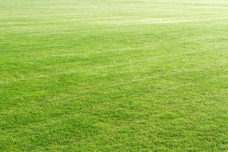 blade of grass: Natural green grass field background