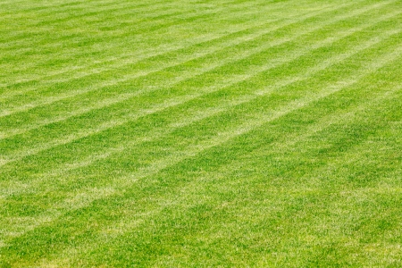 Green grass on football field photo