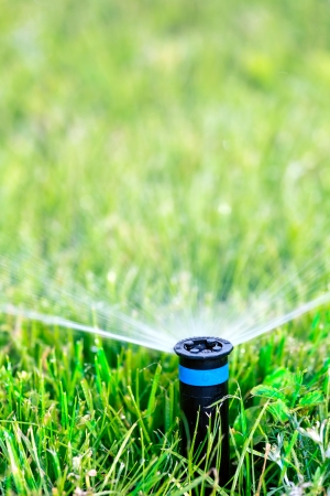 Sprinkler head spraying water on green lawn photo