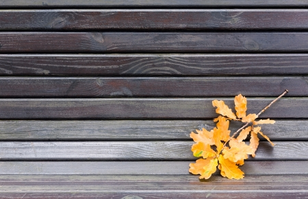 Yellow leaves has fallen to a garden bench photo