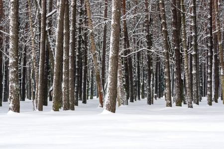 Snow covered trees in winter day Stock Photo - 16007204