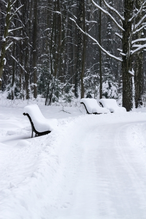 Winter benches in a park photo