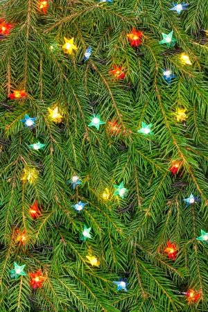 Brightly Christmas lights on green fir tree branches photo
