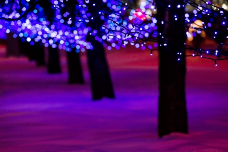 electric avenue: Row of tree and holiday blue illumination