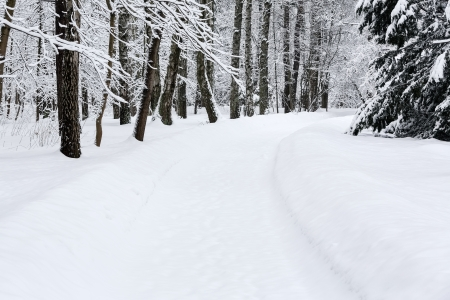 Winter path in forest among trees covered with snow photo