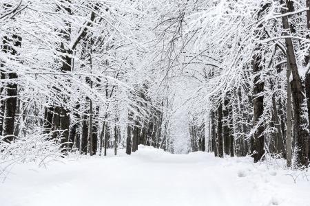 Footpath through winter beech tree forest photo