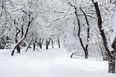 Winter park. Snow covered tree. photo