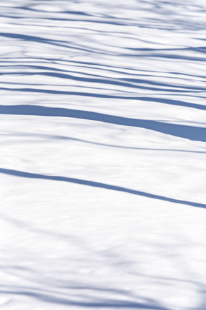 Shadows of tree trunks on snow photo