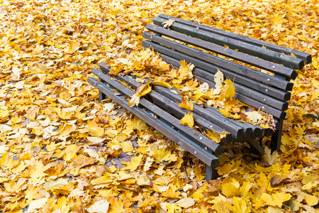 Wooden bench in autumn park with yellow fallen leaves photo