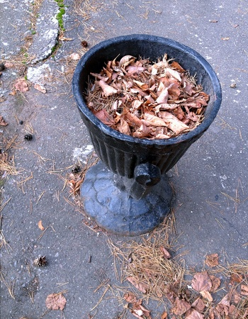 urban: Black trash bin with fallen leaves