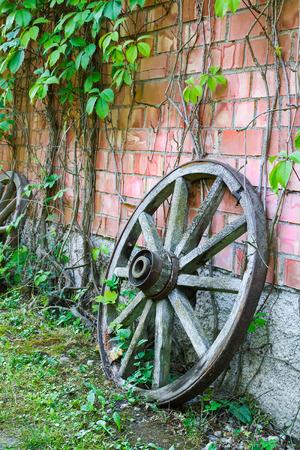 hojas parra: antigua rueda de carro de madera contra la pared con hojas de vid Foto de archivo