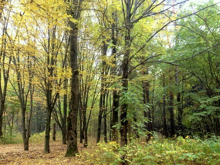 bright: Colorful and bright Autumn Forest with yellow leaves