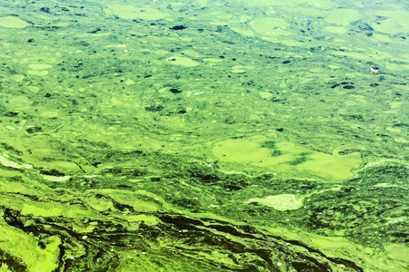 scum: stale water with yellow and green scum strips with pollution Stock Photo