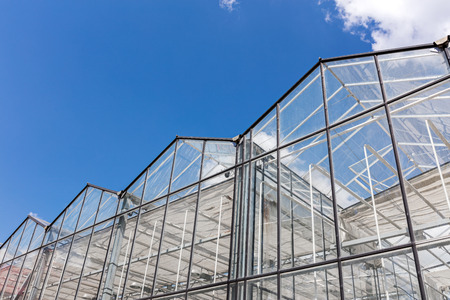 closeup of modern greenhouse complex against blue sky. wide angle view.