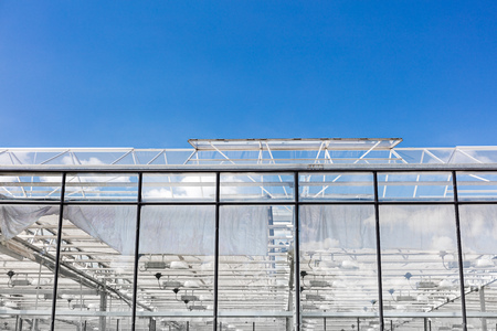 transparent glass roof of greenhouse with open windows for ventilation Stock Photo