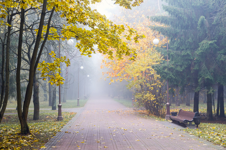 autumnal landscape. park alley with yellow trees alongside it in foggy weather. Stock Photo