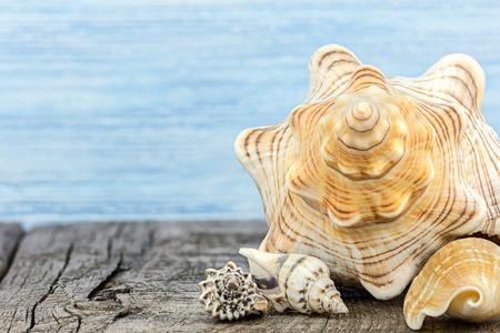 various seashells on grey old wooden boards. summer still life. macro shot.
