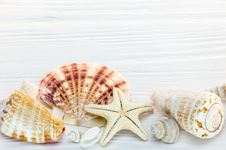 starfish and seashells of different size on white wooden background. macro view