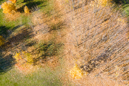 aerial top view of naked treed during fall season. shadow trees silhouettes on park ground
