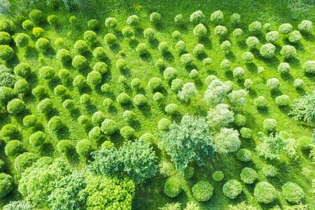 aerial top view of fresh green trees growing in park. natural summer background Reklamní fotografie