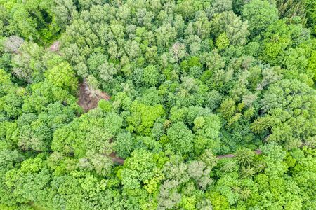 aerial top view of summer green deciduous trees in forest. drone photo 写真素材